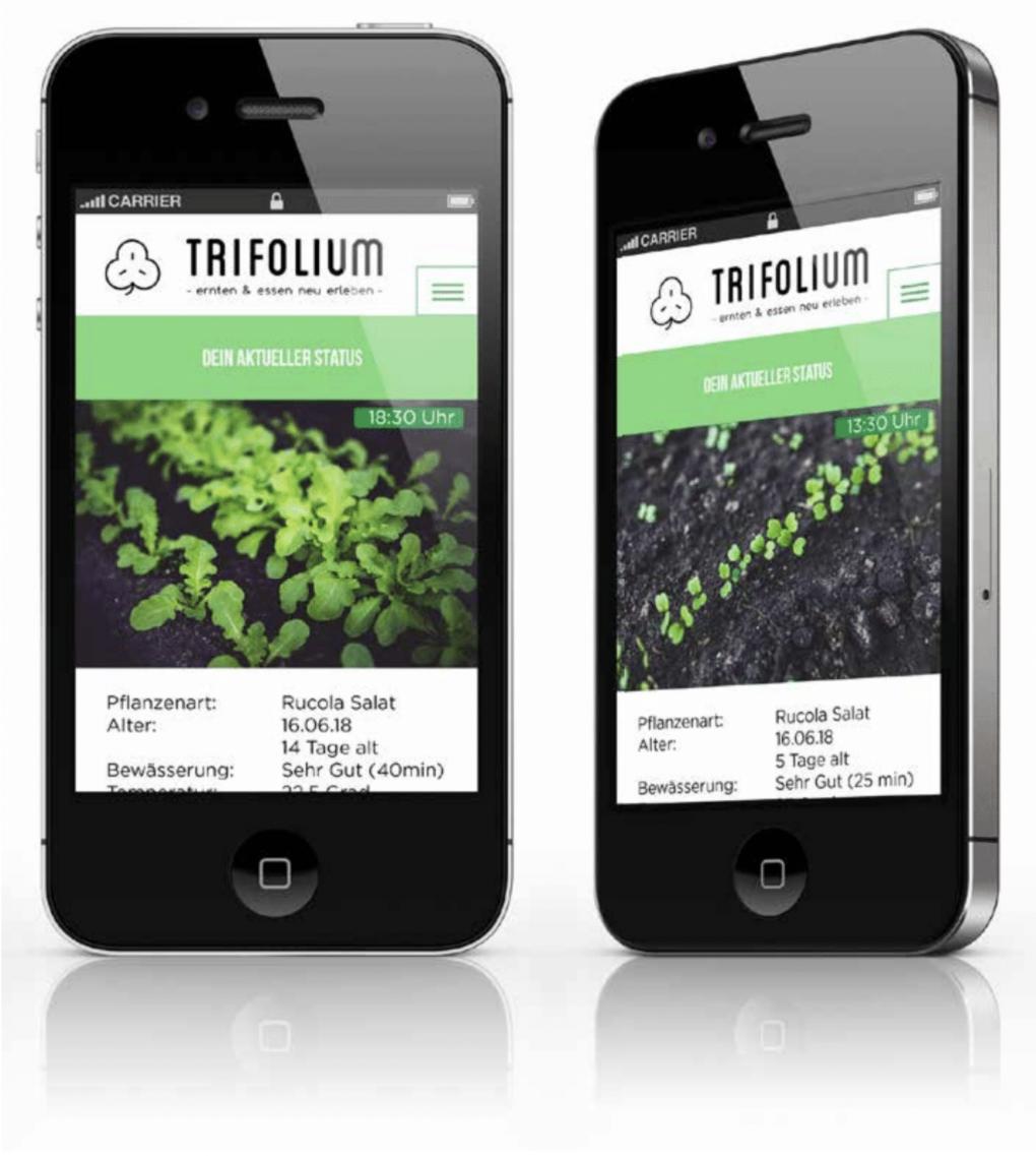 Trifolium - Vertical Farming Restaurant in Hamburg. Abschlussarbeit 2018.